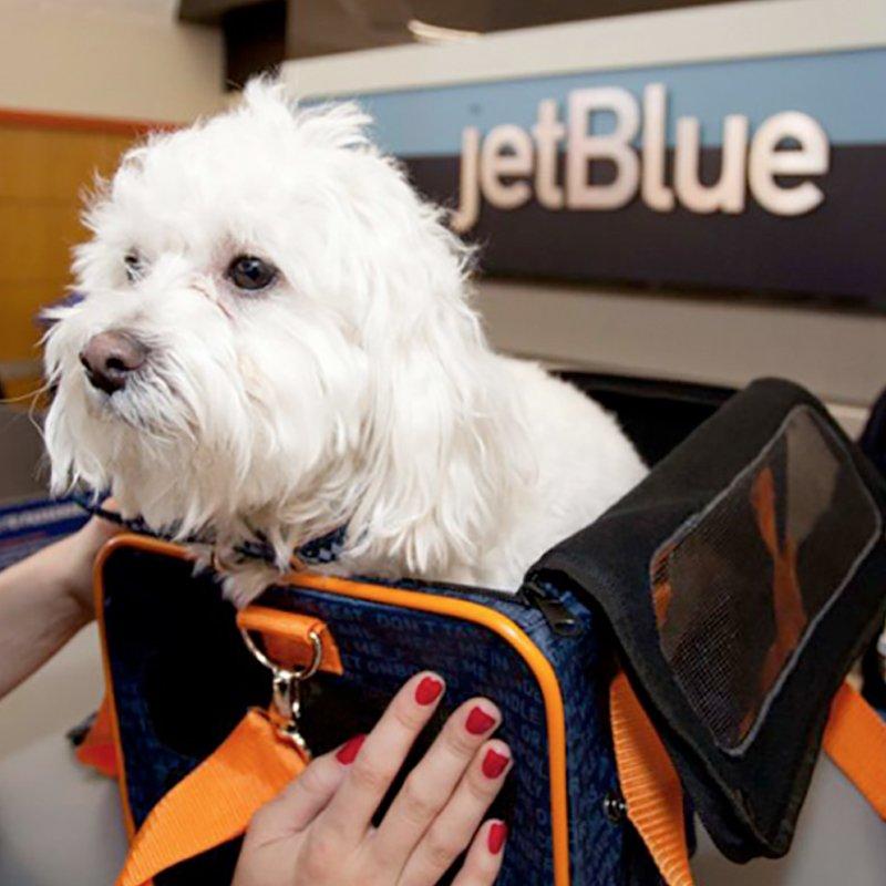 Emotional Support Animals on Jet Blue
