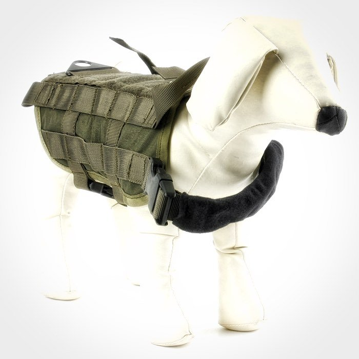 Don't waste money on an emotional support animal vest