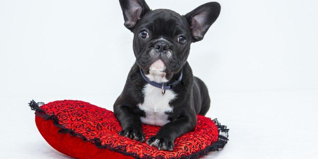 Get Your Eustis Emotional Support Animal letter