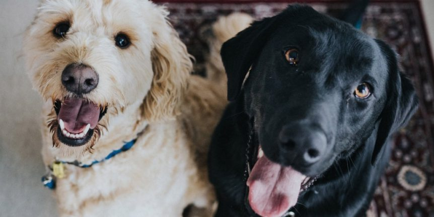 Image of: Delta Thv11com 2019 Update Expert Advice On Esa Dogs