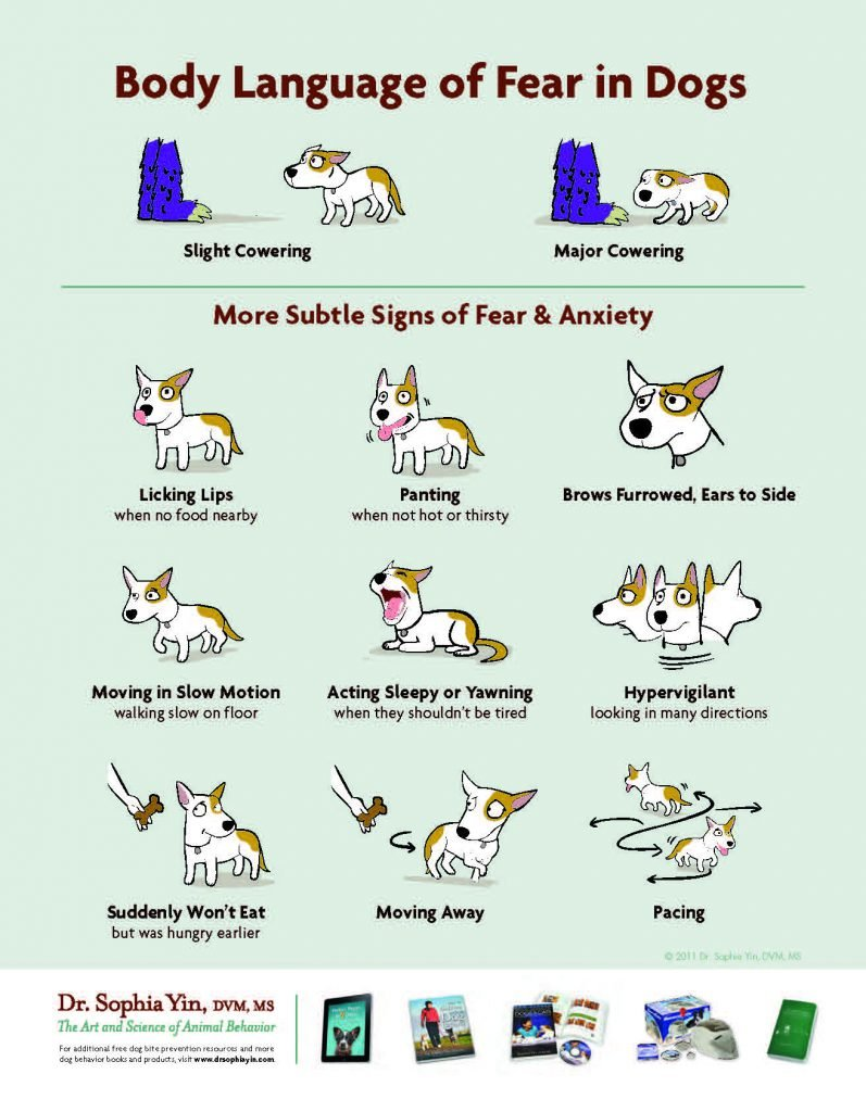 Body Languge Fear in Dogs