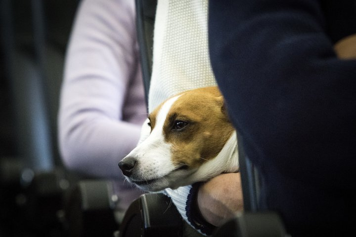 Stop Spoiling Emotional Support Animals For People Who Need Them