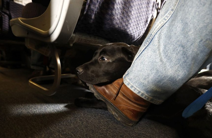 WashPo: Emotional Support Animal Caused Disturbance 61% of the time