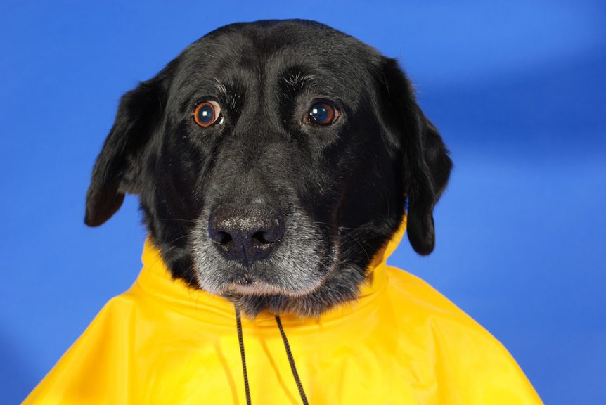 Preparing Your Pets for Hurricane Florence. Get Ready Now.