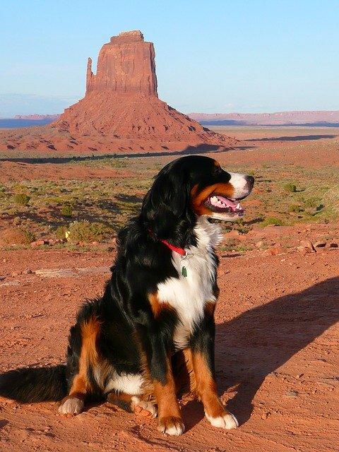 Proyecto de ley en la legislatura de Utah busca regular animales de apoyo emocional