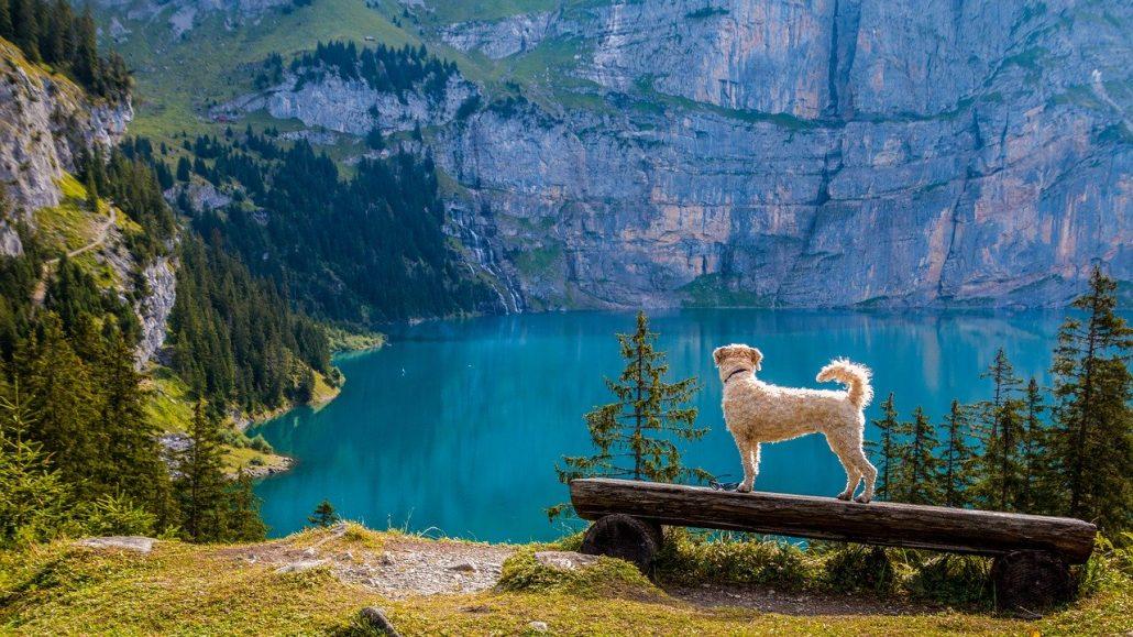 How to Get An Emotional Support Animal in Zurich, Switzerland