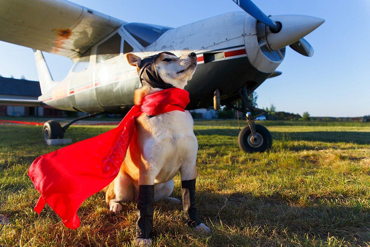 emotional support dog travel