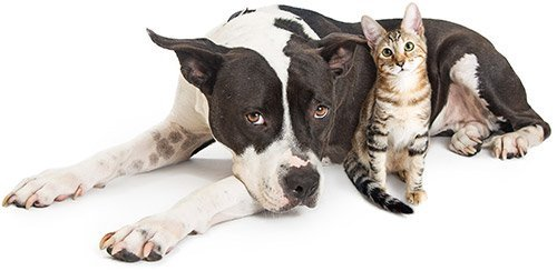 Emotional Support Animal Letters for dogs and cats
