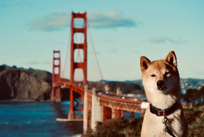 California Laws on Emotional Support Animals in the Workplace