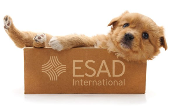 ESADoggy In A Box 2020