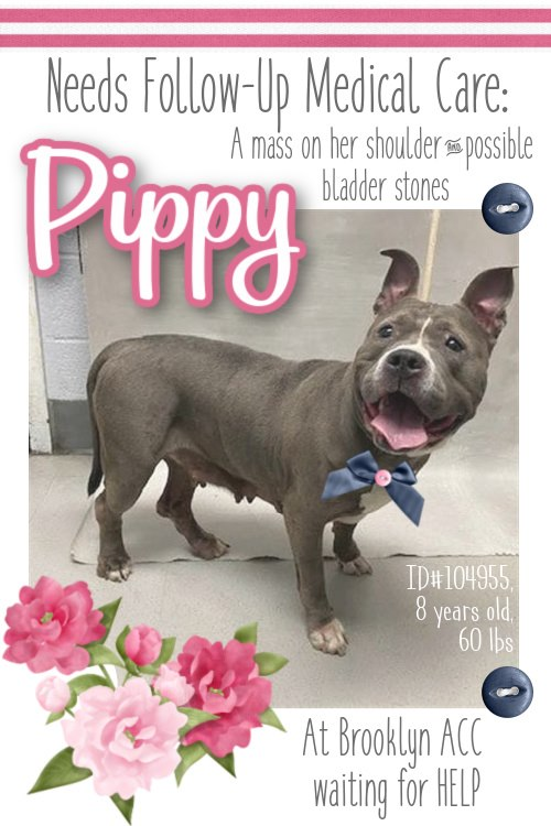 Pretty Pippy arrived at the shelter in her sweetheart fashion despite not feeling well.