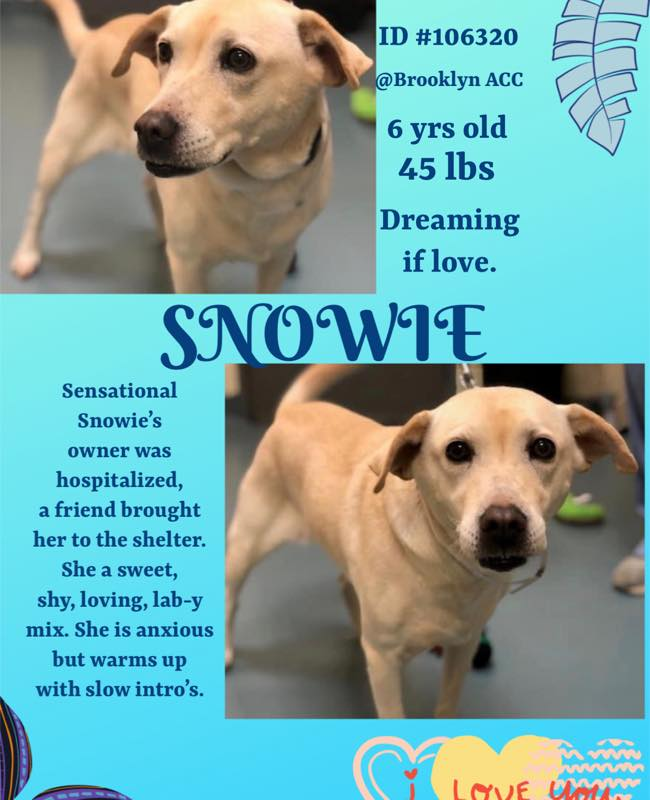 SNOWIE 106320 BROOKLYN ACC