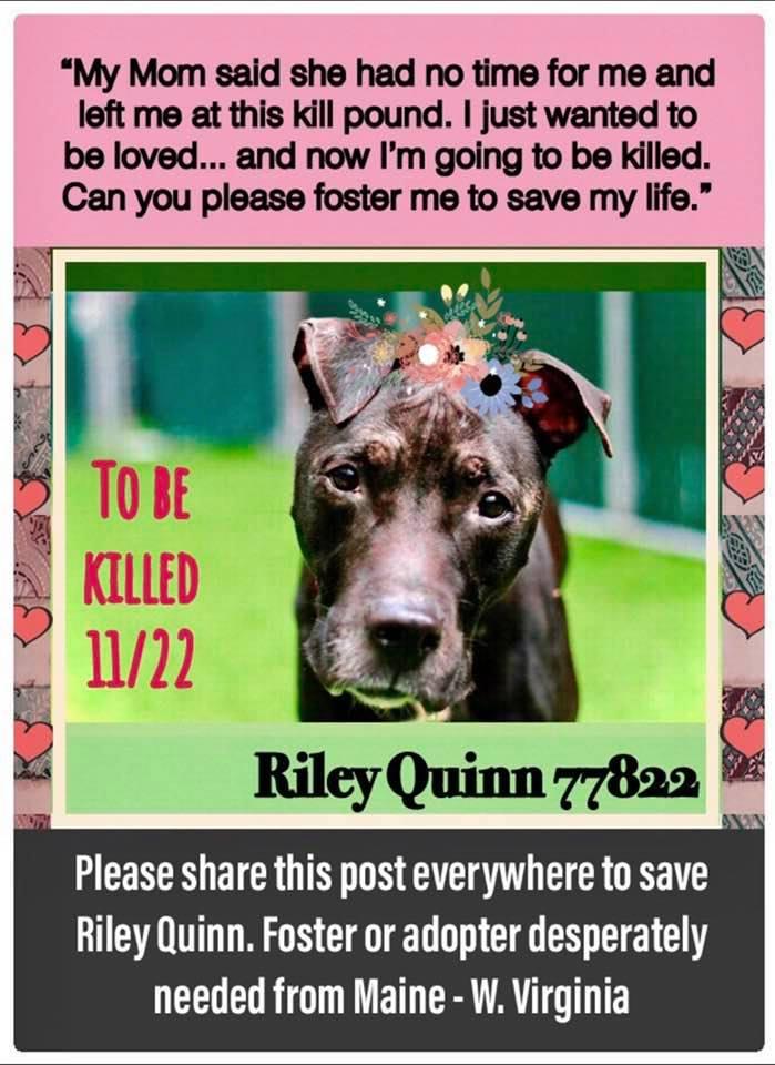 RILEY QUINN #77822